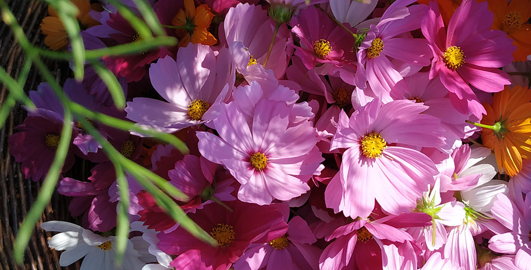 Le Collectif de la fleur française  est une association au service du Slow flower