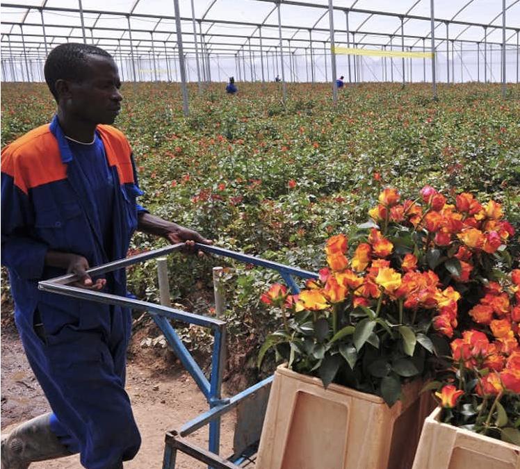 Slow flowers : un nouveau concept pour relancer la production de fleurs françaises ?