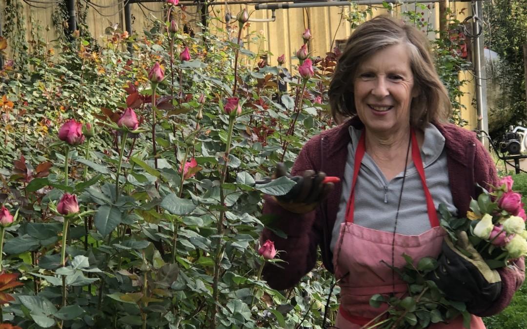Corse : Jeannine cherche à transmettre sa ferme florale…