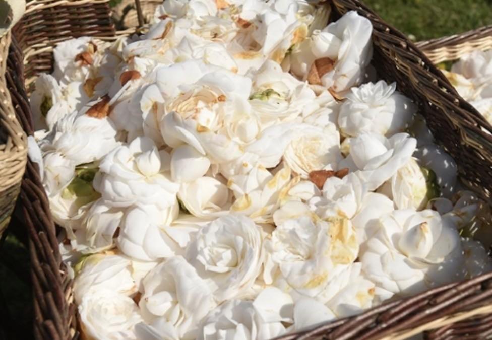 France: Chanel créé un «laboratoire à ciel ouvert» pour cultiver le camélia, fleur emblématique de sa créatrice