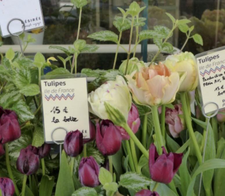 Dynamiques autour de la production de fleurs coupées en Île-de-France – Léa Benoit