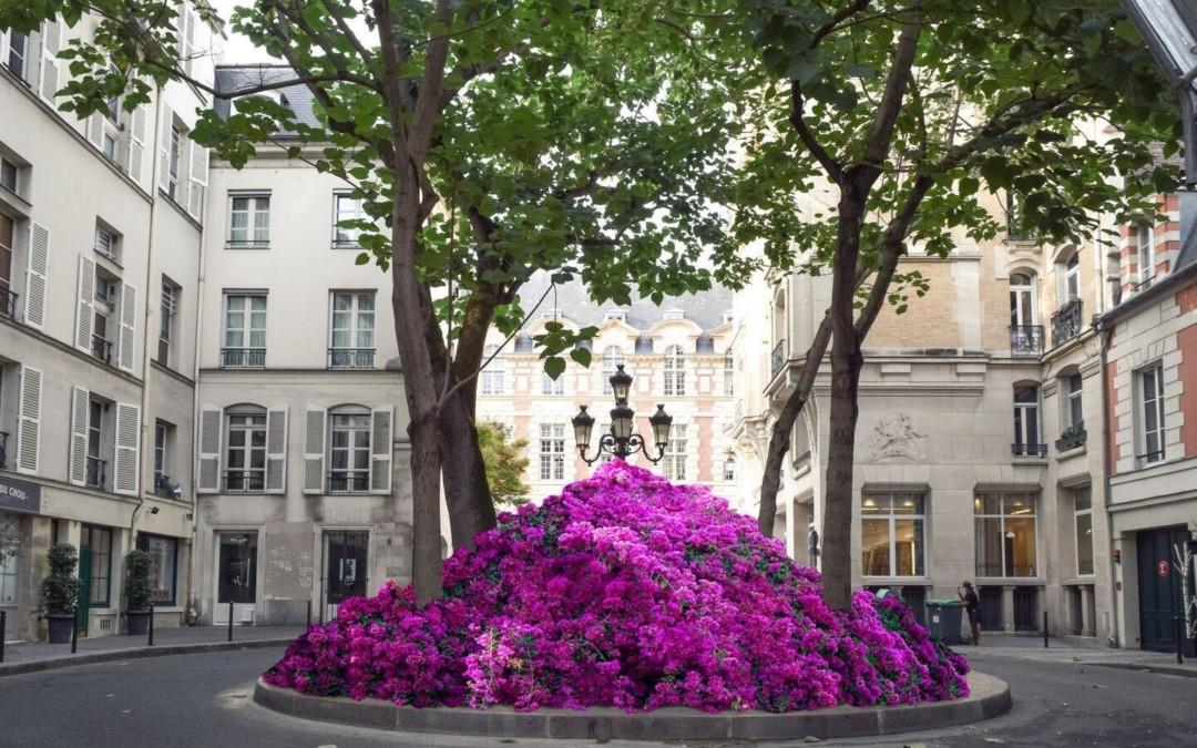 Devenez collectionneur.se d'art et soutenez le collectif de la fleur française !