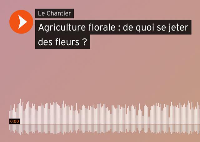 Agriculture florale : de quoi se jeter des fleurs ?